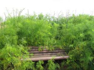 sitting with fennel