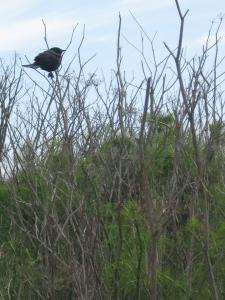 bird/fennel